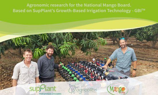 mango-experiment-2