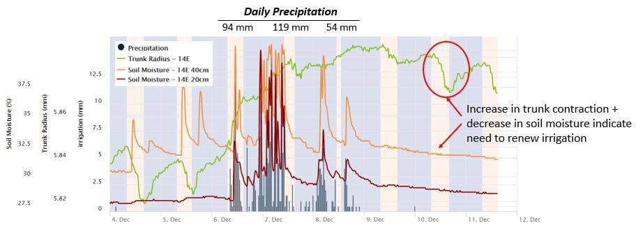 Daily Precipitation