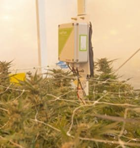 Phyto Monitoring of Cannabis