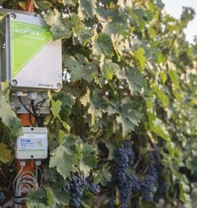 Accurate irrigation management - WINE GRAPES